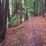 Mountainbike i dollerup bakker & Hald Ege