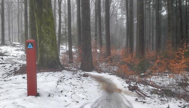 Vintertræning på mountainbike i skoven
