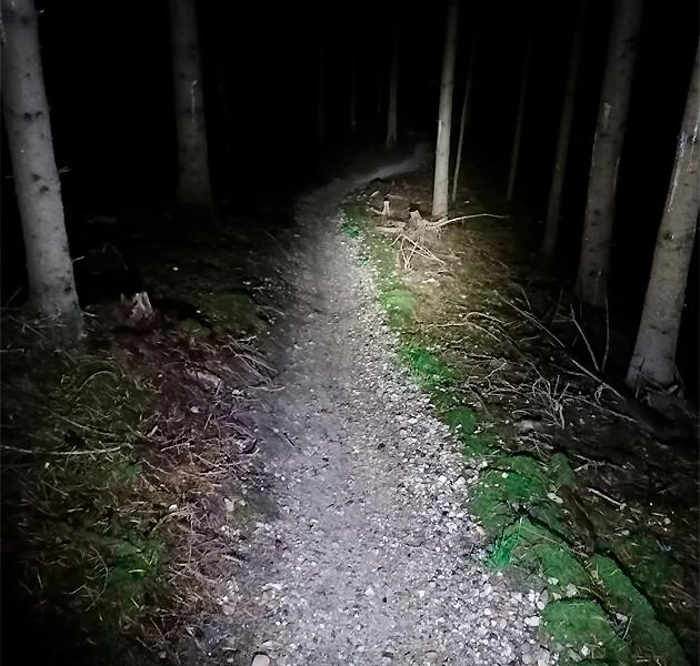 Billede af cykellygte der lyser en skov op